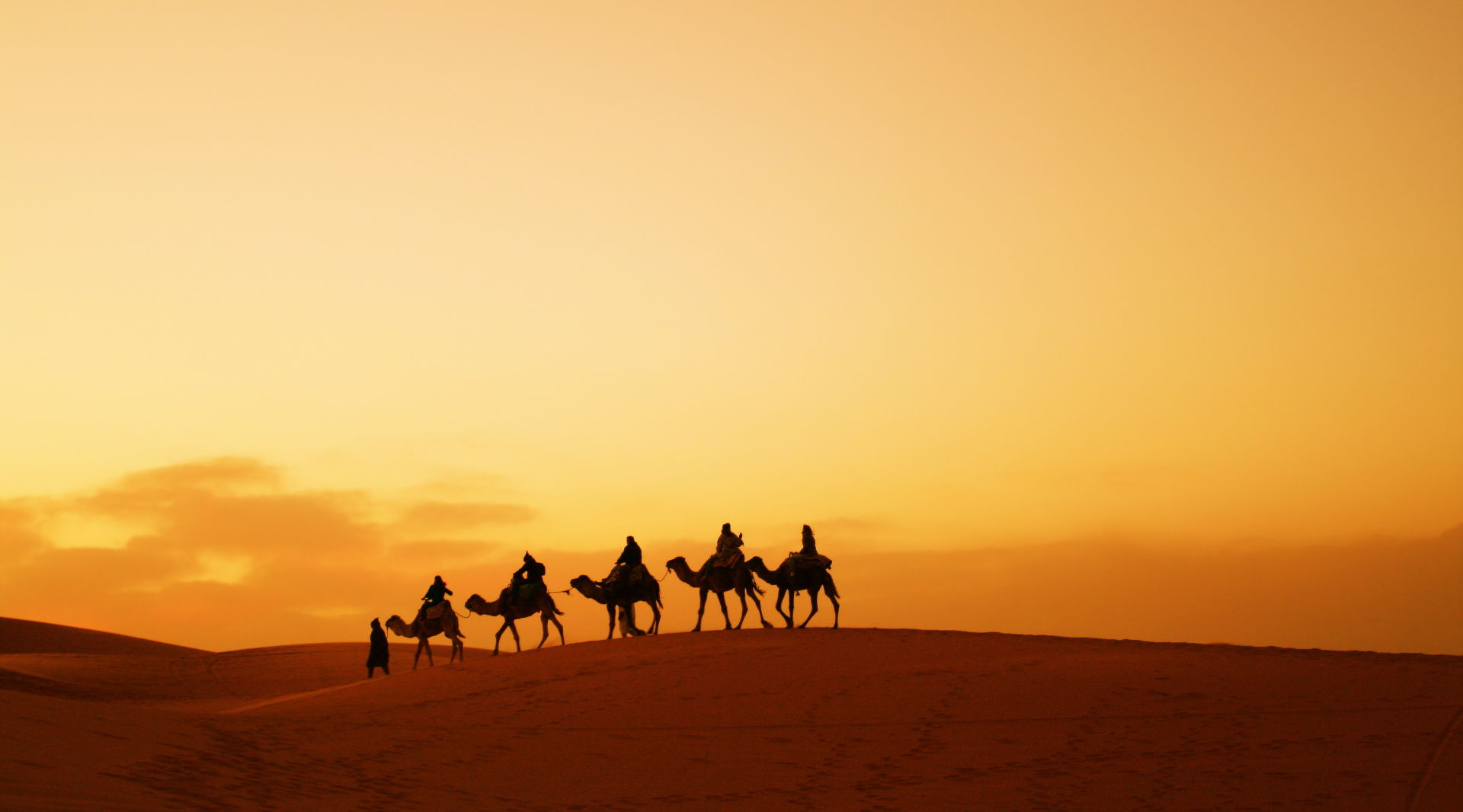 Camel Trekking In The Desert Of Morocco