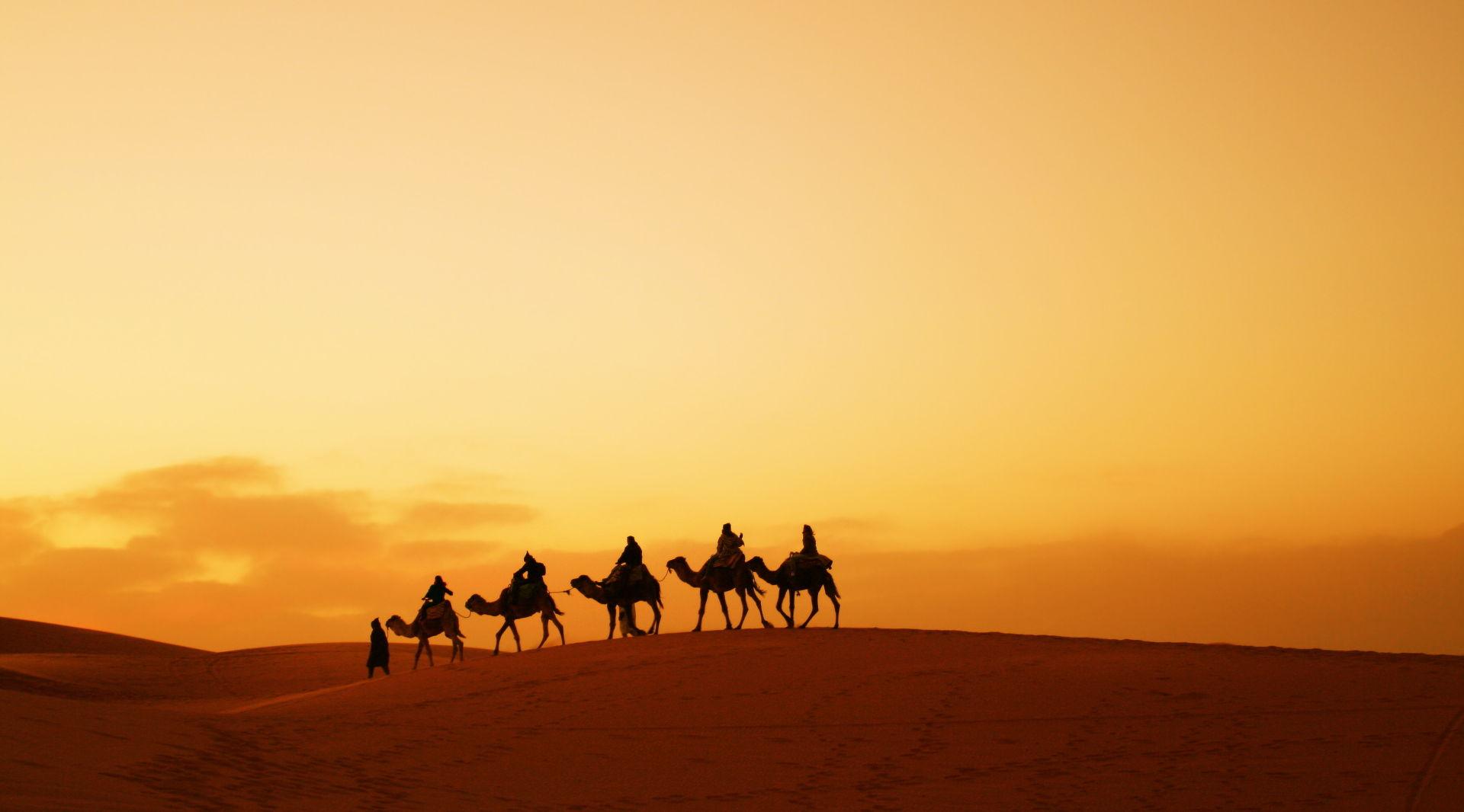 Camel Trekking In The Desert Of Morocco